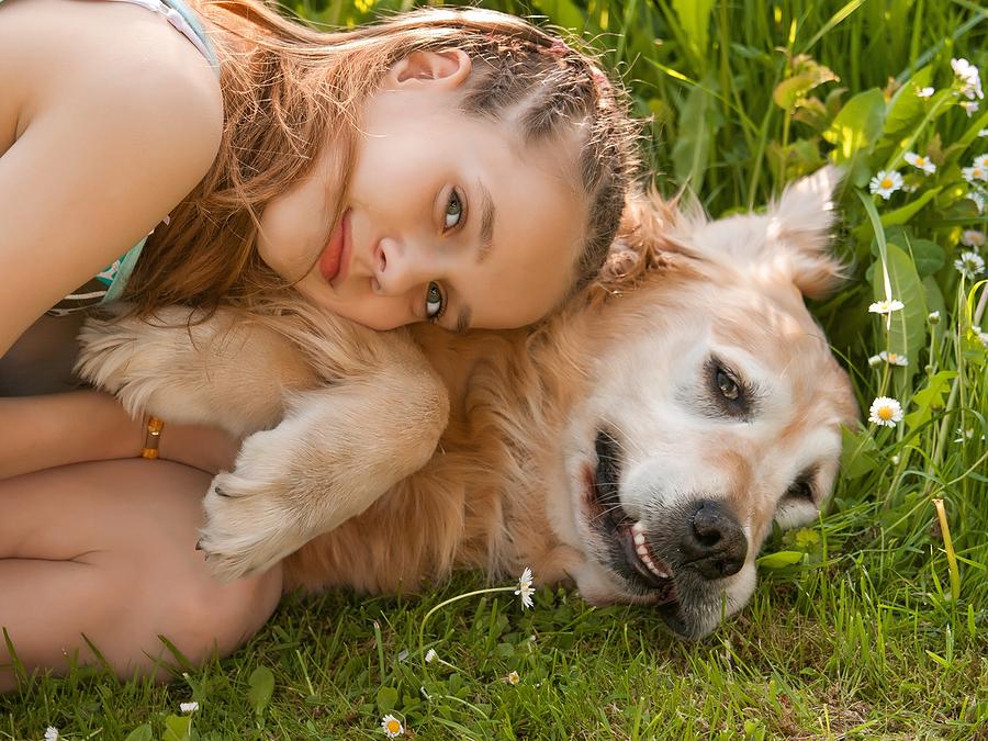 Tierkrankenversicherung kosten berechnen